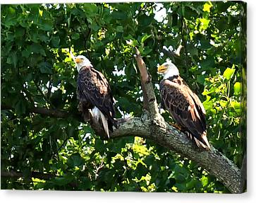 Canvas Print featuring the photograph Mating Pair by Randall Branham