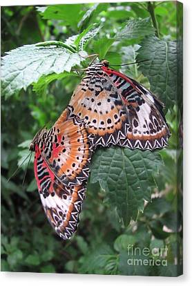 Mating Season Canvas Print by Michelle H