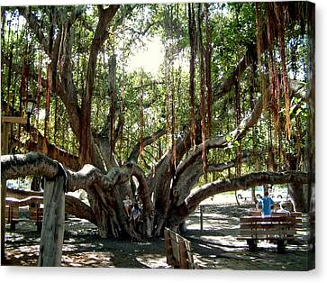 Canvas Print featuring the photograph Maui Banyan Tree Park by Rob Green