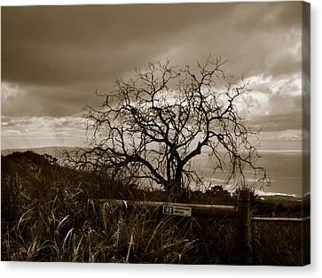 Maui Storm Canvas Print