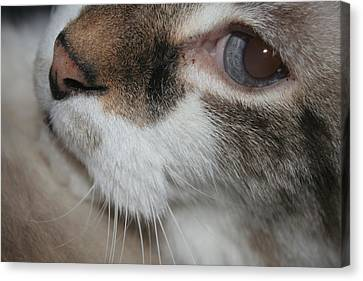 Canvas Print featuring the photograph Max - Up Close And Personal by Lou Belcher