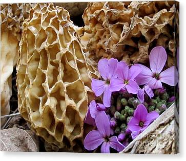 May Is For Morels Canvas Print by Timothy Myles