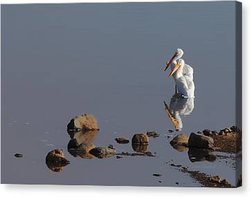 Me And My Gal Canvas Print by Donna Blackhall