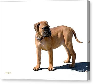 Me And My Shadow 4 Canvas Print by Dale   Ford