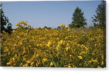 Meadow At Terapin Park Canvas Print by Charles Kraus