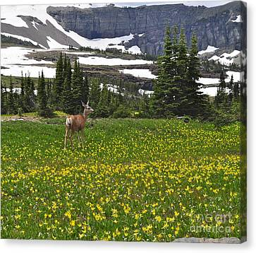 Canvas Print featuring the photograph Meadow Deer by Johanne Peale