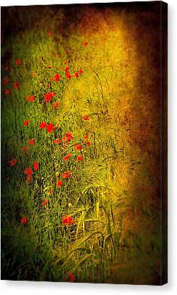 Meadow Canvas Print by Svetlana Sewell