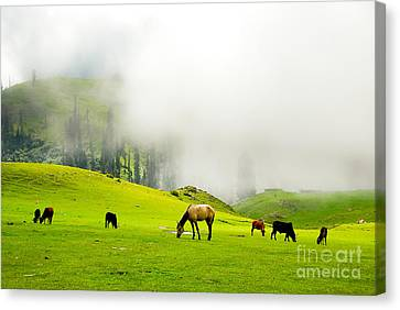 Meadows Of Heaven Canvas Print by Syed Aqueel
