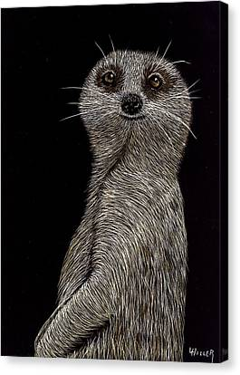 Meerkat On Watch Canvas Print by Linda Hiller
