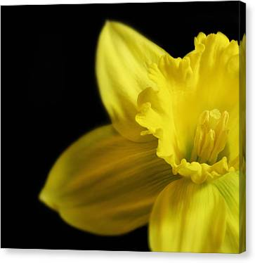 Mellow Yellow Canvas Print by Peter Chilelli