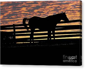 Memorial Day Weekend Sunset In Georgia - Horse - Artist Cris Hayes Canvas Print by Cris Hayes