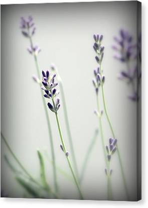 Canvas Print featuring the photograph Memories Of Provence by Brooke T Ryan