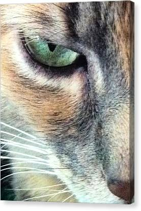 Meow Meow Canvas Print by Tia Anderson-Esguerra