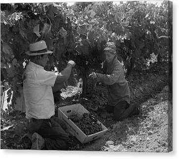 Mexican American Migrant Laborers Canvas Print by Everett