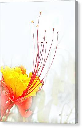 Mexican Bird Of Paradise Canvas Print by Kume Bryant