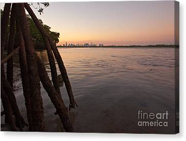 Miami And Mangroves Canvas Print