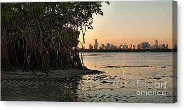 Miami With Mangroves Canvas Print