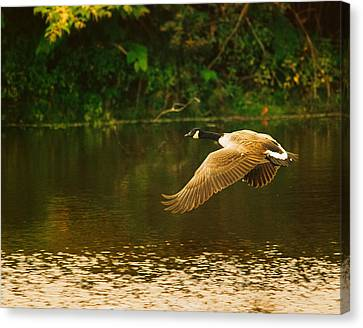 Midmorning Launch Canvas Print by Susan Capuano