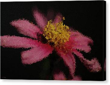 Midnight Bloom Canvas Print by Lauren Radke