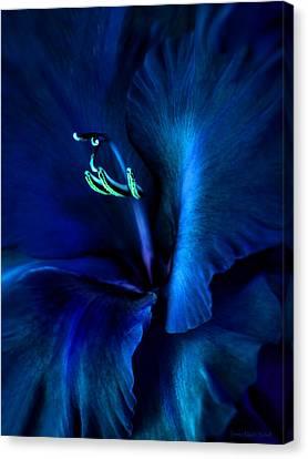 Midnight Blue Gladiola Flower Canvas Print by Jennie Marie Schell