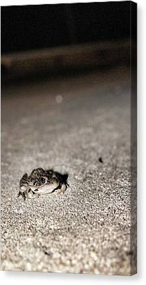 Midnight Frog Canvas Print