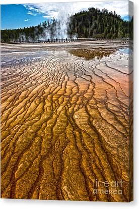 Midway Geyser Basin Spring In Yellowstone National Park Canvas Print by Gregory Dyer