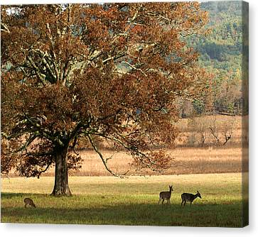 Mighty Oak Canvas Print by TnBackroadsPhotos