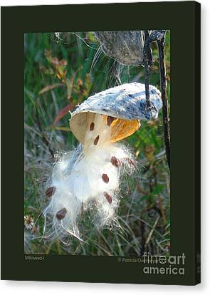Milkweed-i Canvas Print by Patricia Overmoyer