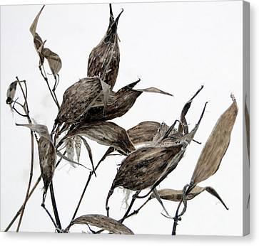 Milkweed In Winter Canvas Print