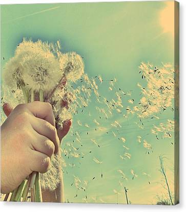 Millions Of Wishes... Canvas Print