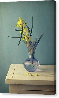Mimosa Flower In Blue Vase Canvas Print by Copyright Anna Nemoy(Xaomena)