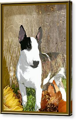 Minature Bull Terrier Canvas Print by One Rude Dawg Orcutt