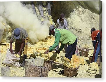 Miners Collecting Lumps Of Sulphur Canvas Print by Richard Roscoe
