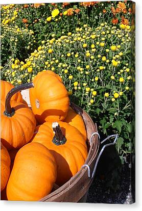 Farm Stand Canvas Print - Mini Pumpkins by Kimberly Perry