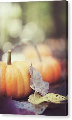 Mini Pumpkins With Leaves Canvas Print by Samantha Wesselhoft Photography