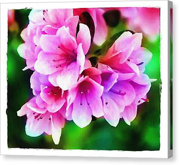 Miniature Azaleas Canvas Print by Judi Bagwell