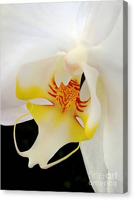 Miniature Orchid And Stamen - Doritaenopsis Orchid Canvas Print by Kaye Menner