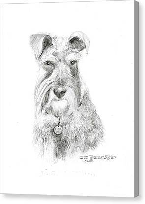 Canvas Print featuring the drawing Miniature Schnauzer by Jim Hubbard
