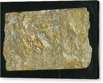 Mining Drill Core Sample With Gold Content Canvas Print by Kaj R. Svensson