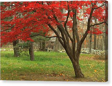Minuteman National Historic Park Late Foliage Canvas Print by John Burk