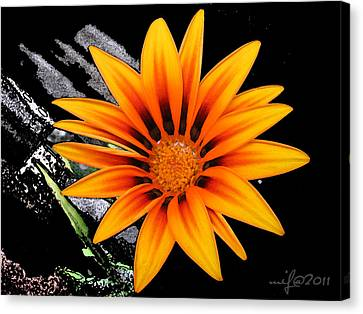 Miracle Of A Flower Canvas Print by Maciek Froncisz