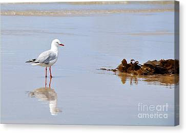 Mirrored Seagull Canvas Print by Kaye Menner