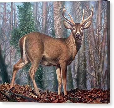 Missouri Whitetail Deer Canvas Print by Hans Droog