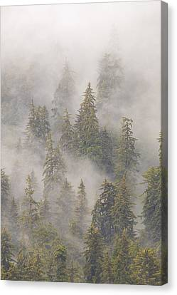 Mist In Tongass National Forest Canvas Print
