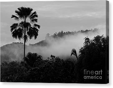 Mist Od Dawn.  Canvas Print