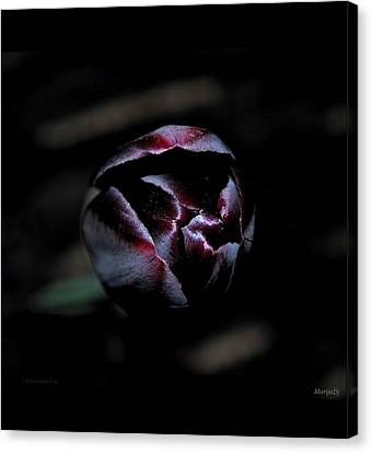 Canvas Print featuring the photograph Misterious by Marija Djedovic
