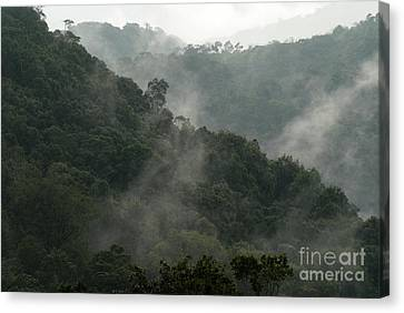 Canvas Print featuring the photograph Misty Cloud Forest Matagalpa Nicaragua by John  Mitchell