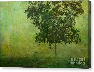 Misty Country Lane Canvas Print by Judi Bagwell