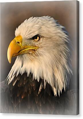 Misty Eagle Canvas Print by Marty Koch