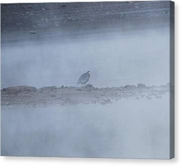 Misty Morning At Norris Lake Canvas Print